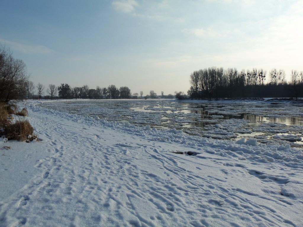 Eisschollen auf der Elbe bei Coswig Anhalt